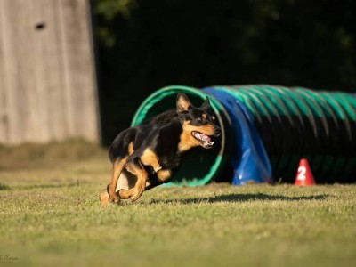 Concours Agility